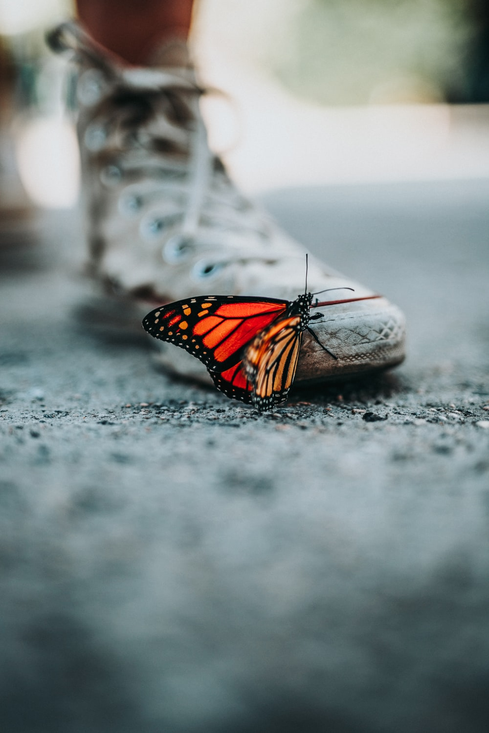 selective focus photo of butterfly on shoe