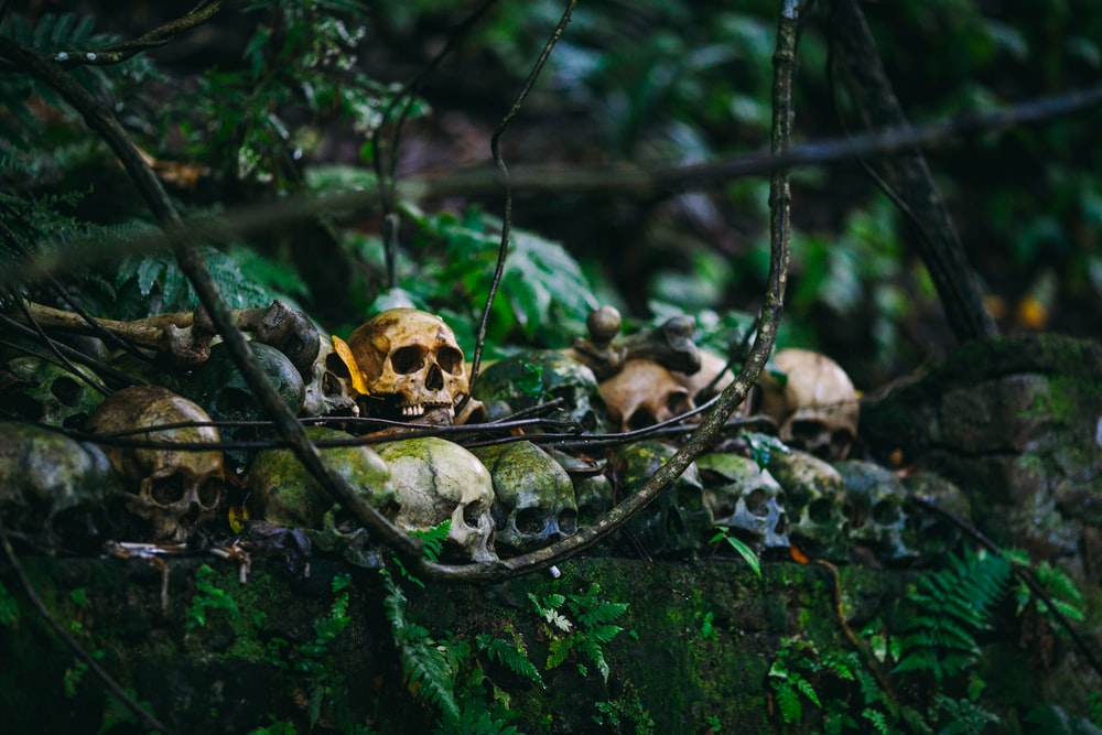 skull lot on forest