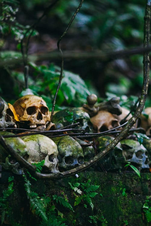 A pile of skulls in a forest.