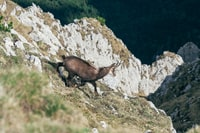 black and brown deer on mountain
