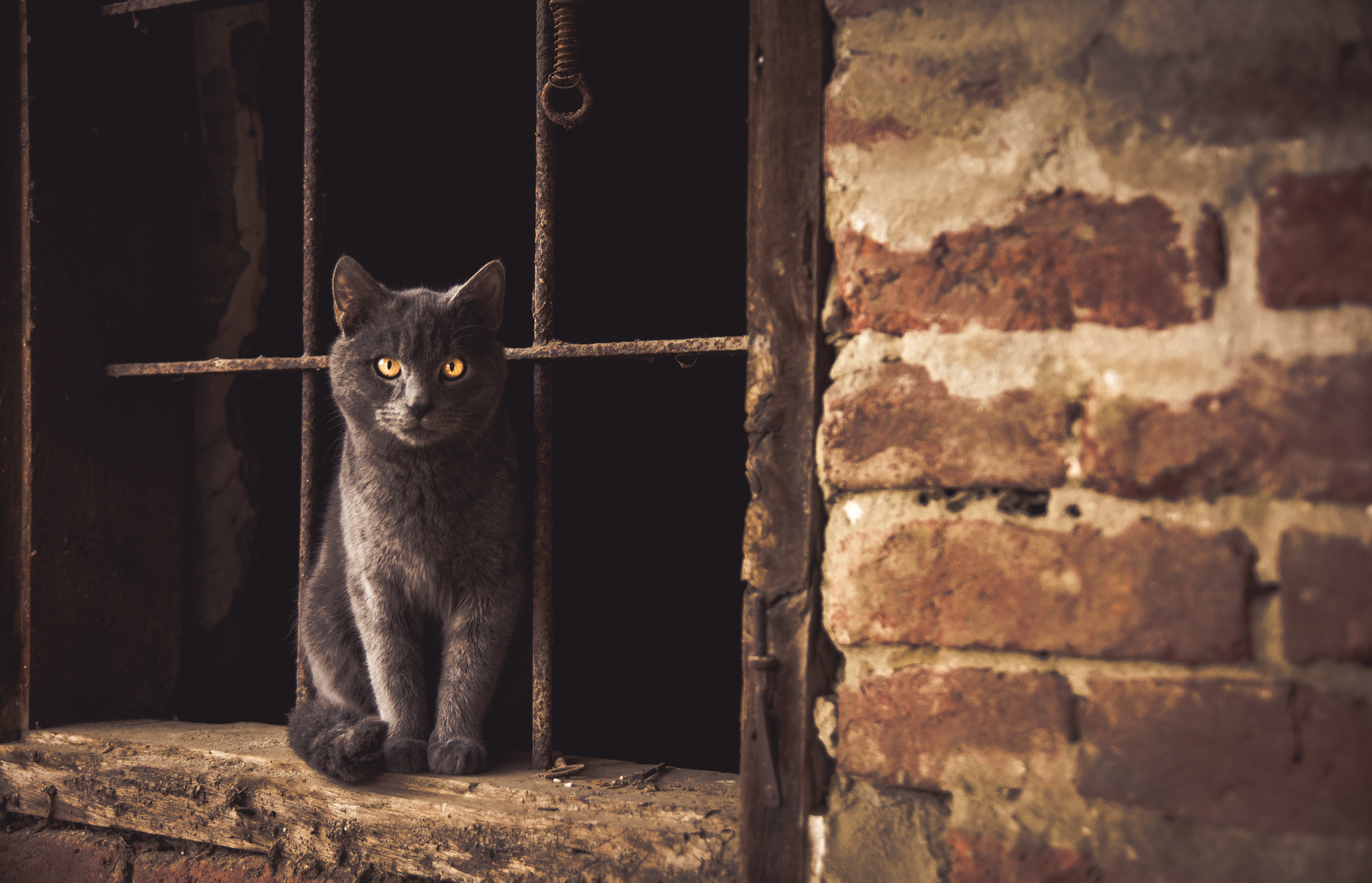 Gray cat with yellow eyes sits in window of old building with rusted bars and brick