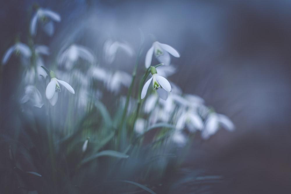 macroshot photography of white flowers