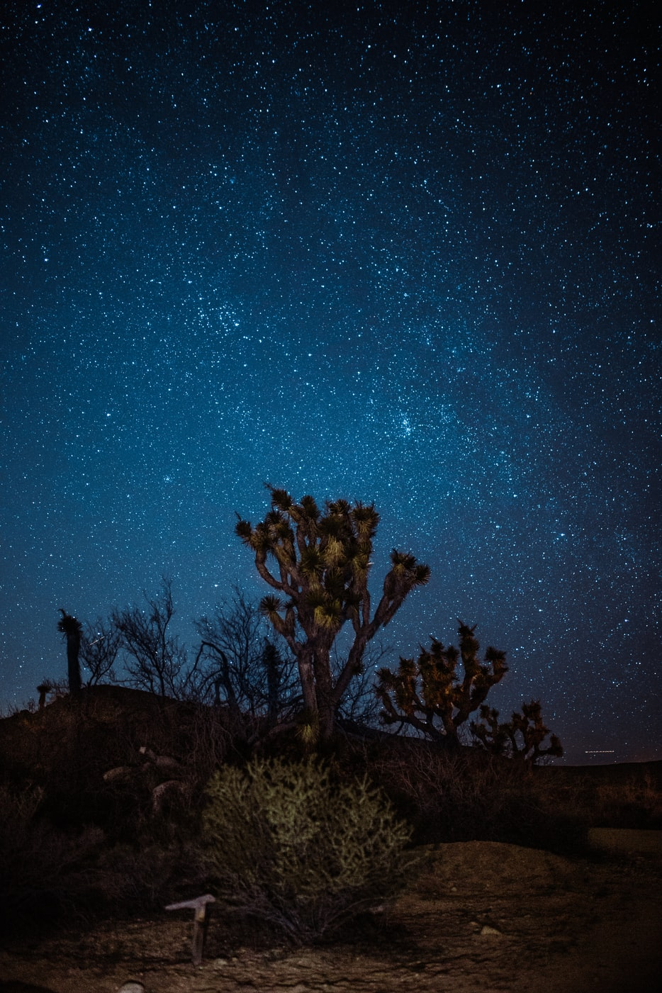 joshua tree under starry sky
