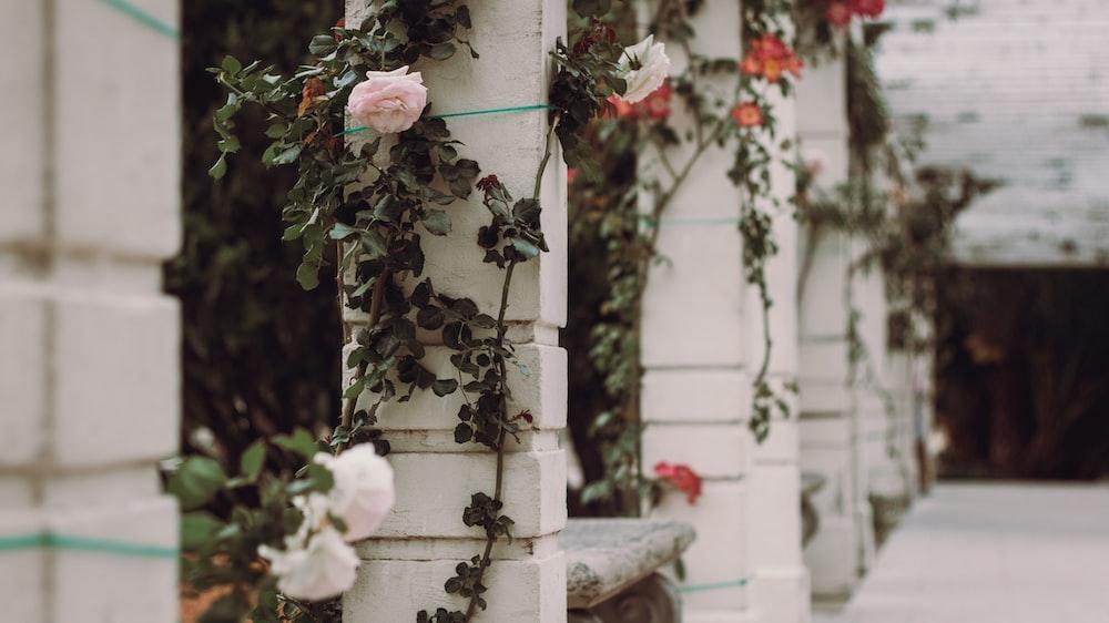 white petaled roses on white concrete pillar