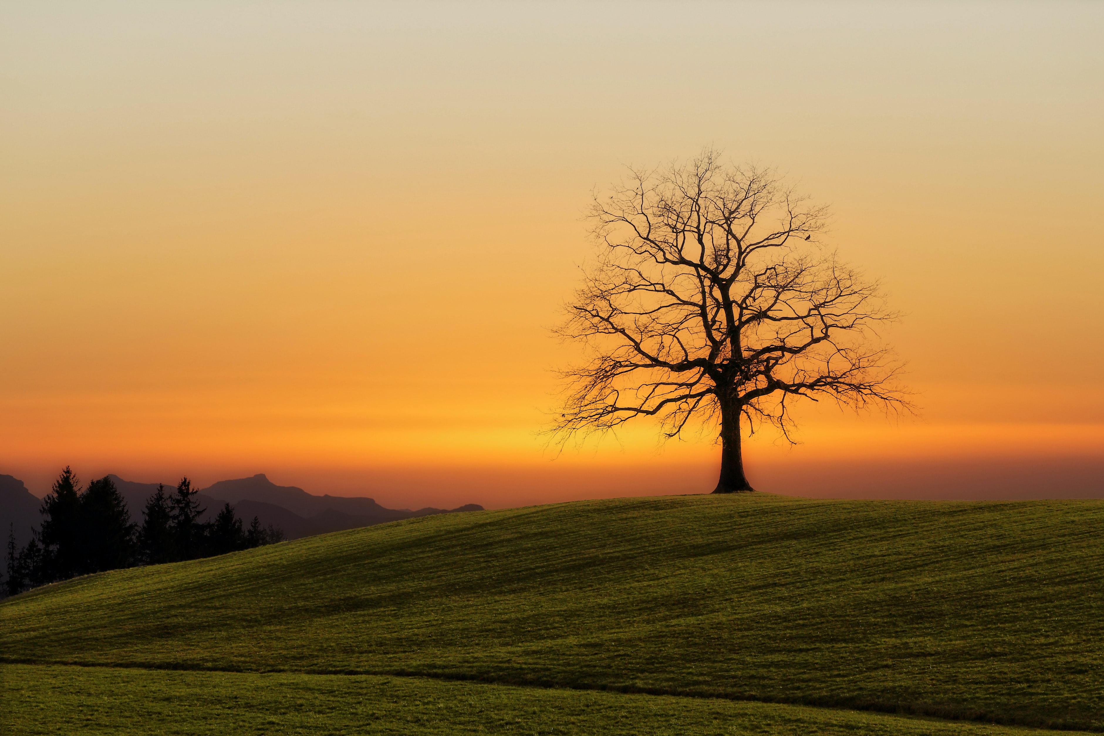 bare tree during sunset