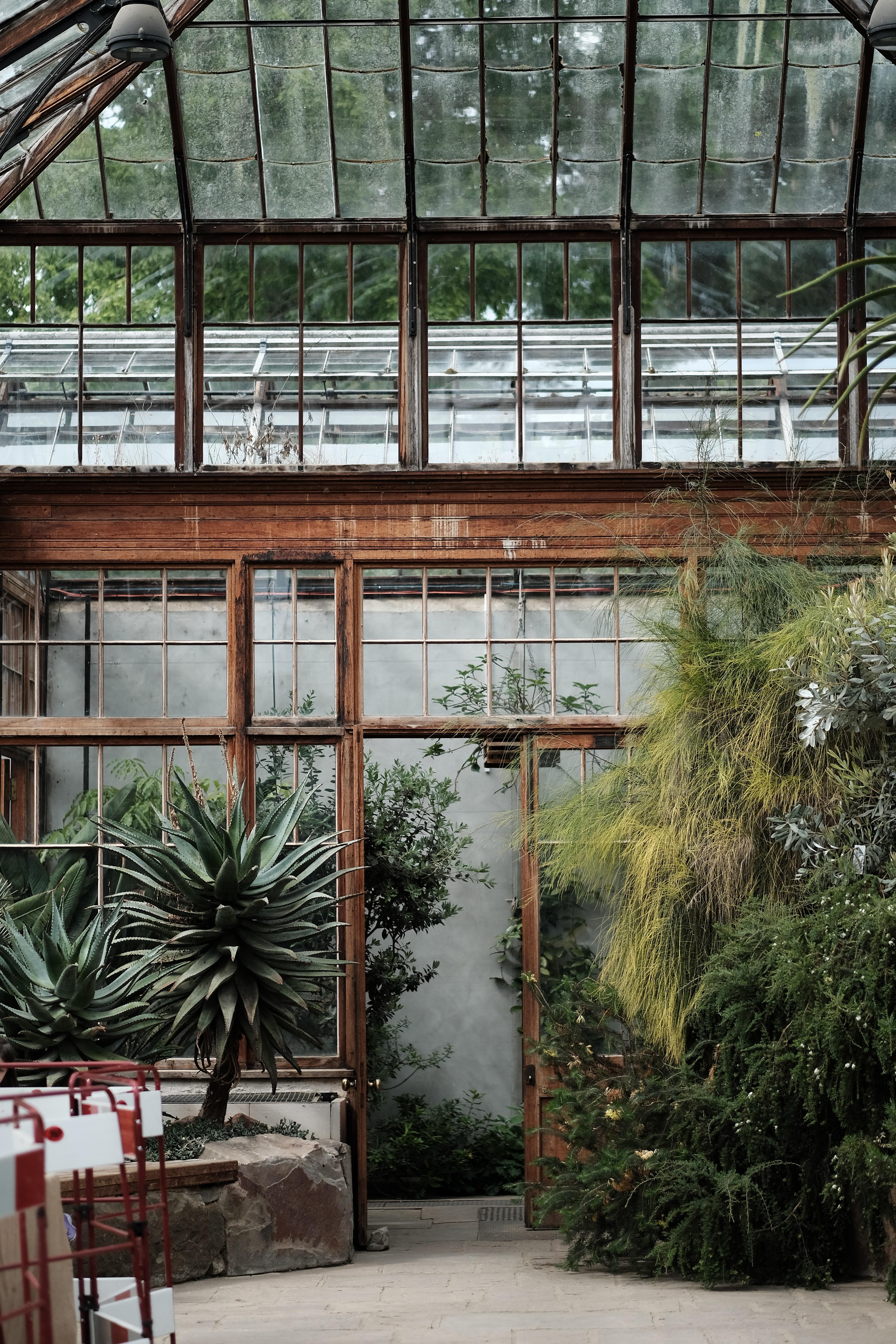 An inside look at a glass house garden in Cambridge Botanic Garden Hills Road Entrance