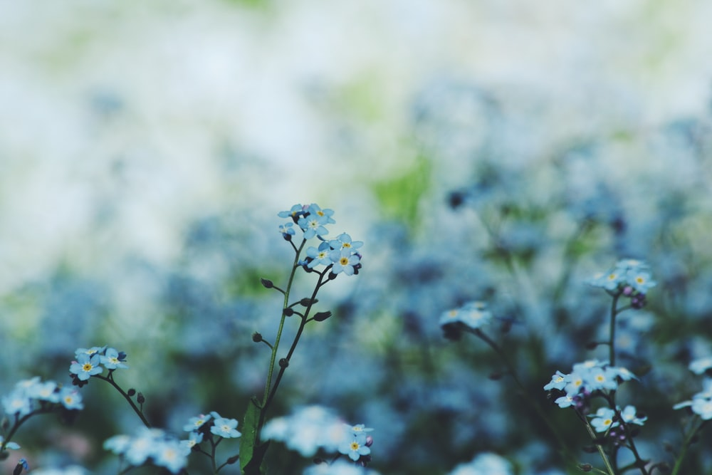 selective focus photography of white petaled flowers in bloom