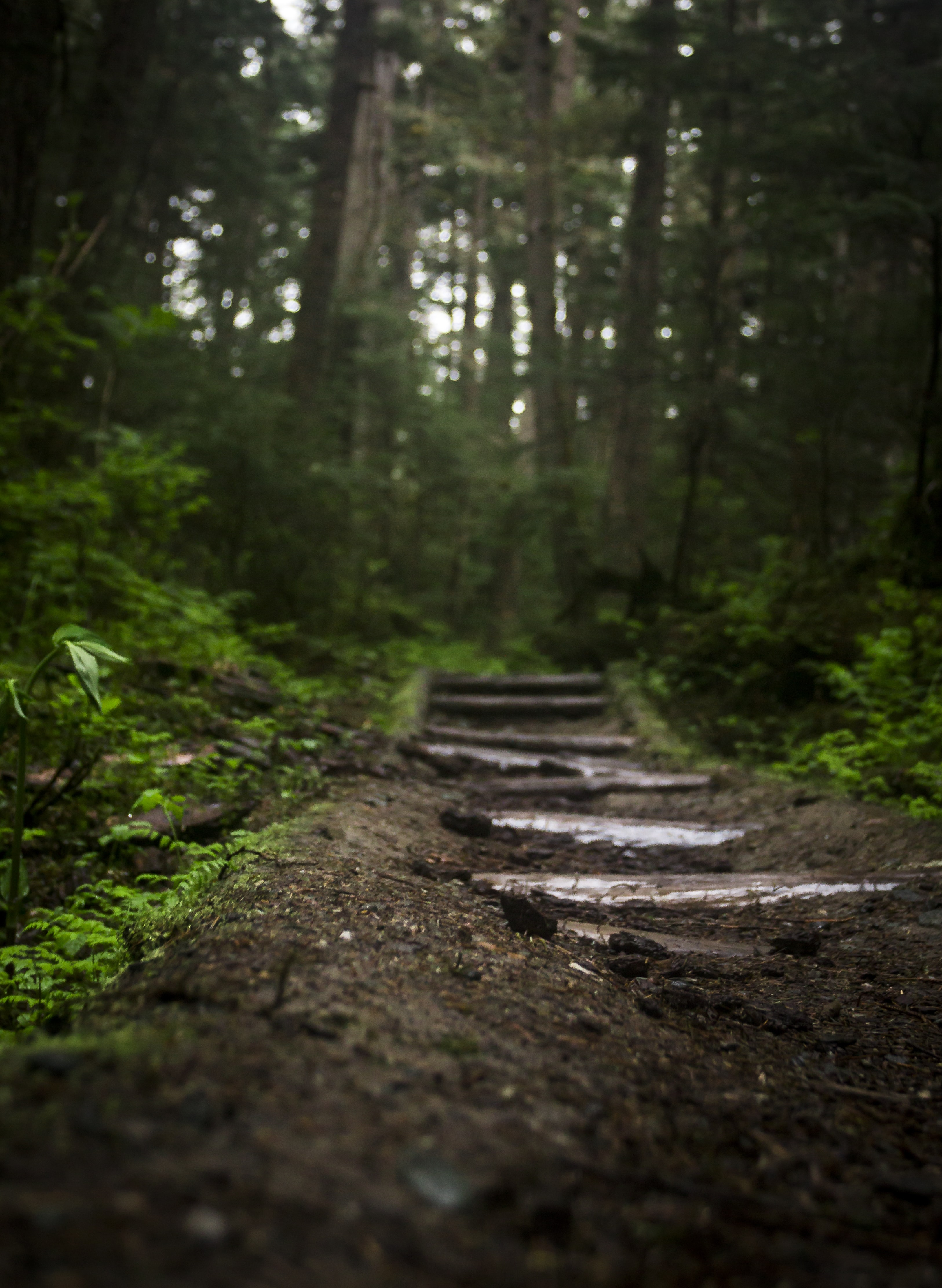 Wooden steps on a trail through a forest