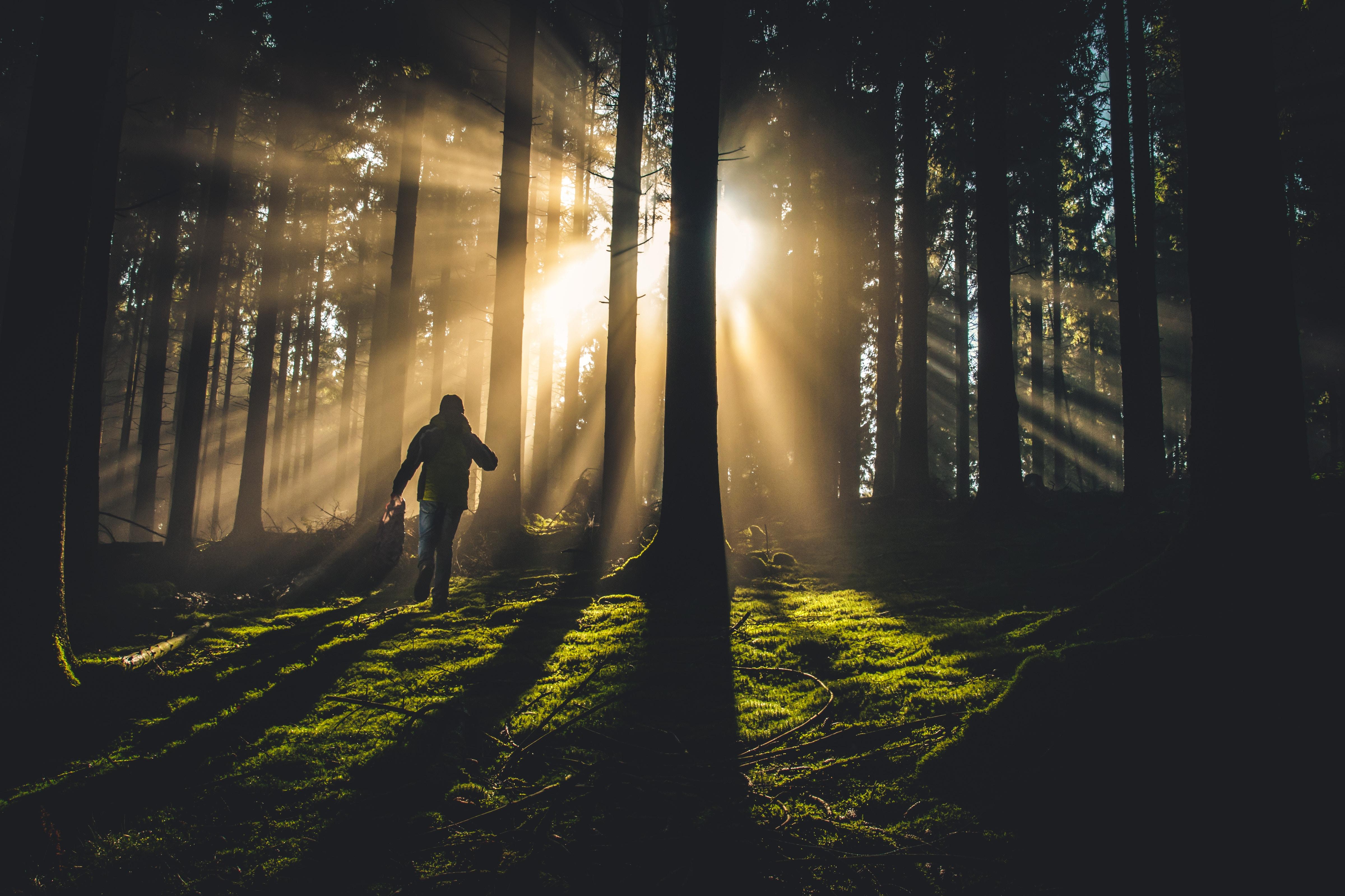 A man walking through the trees toward a sunset