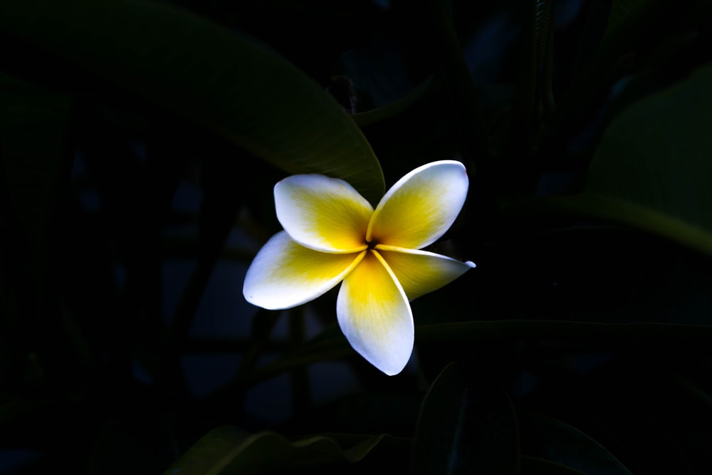 macro photography of white and yellow flower