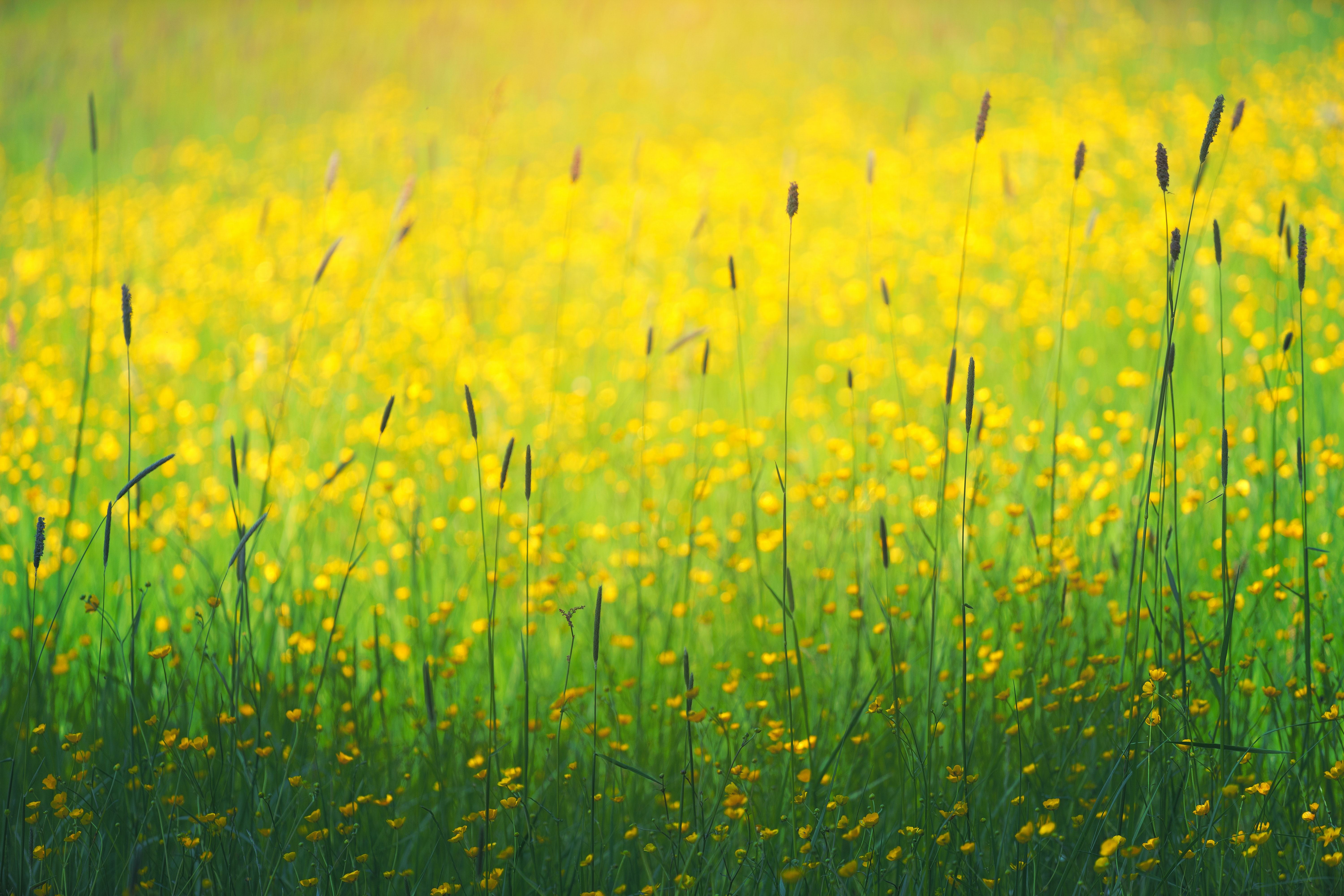 photography of yellow petaled flowers field