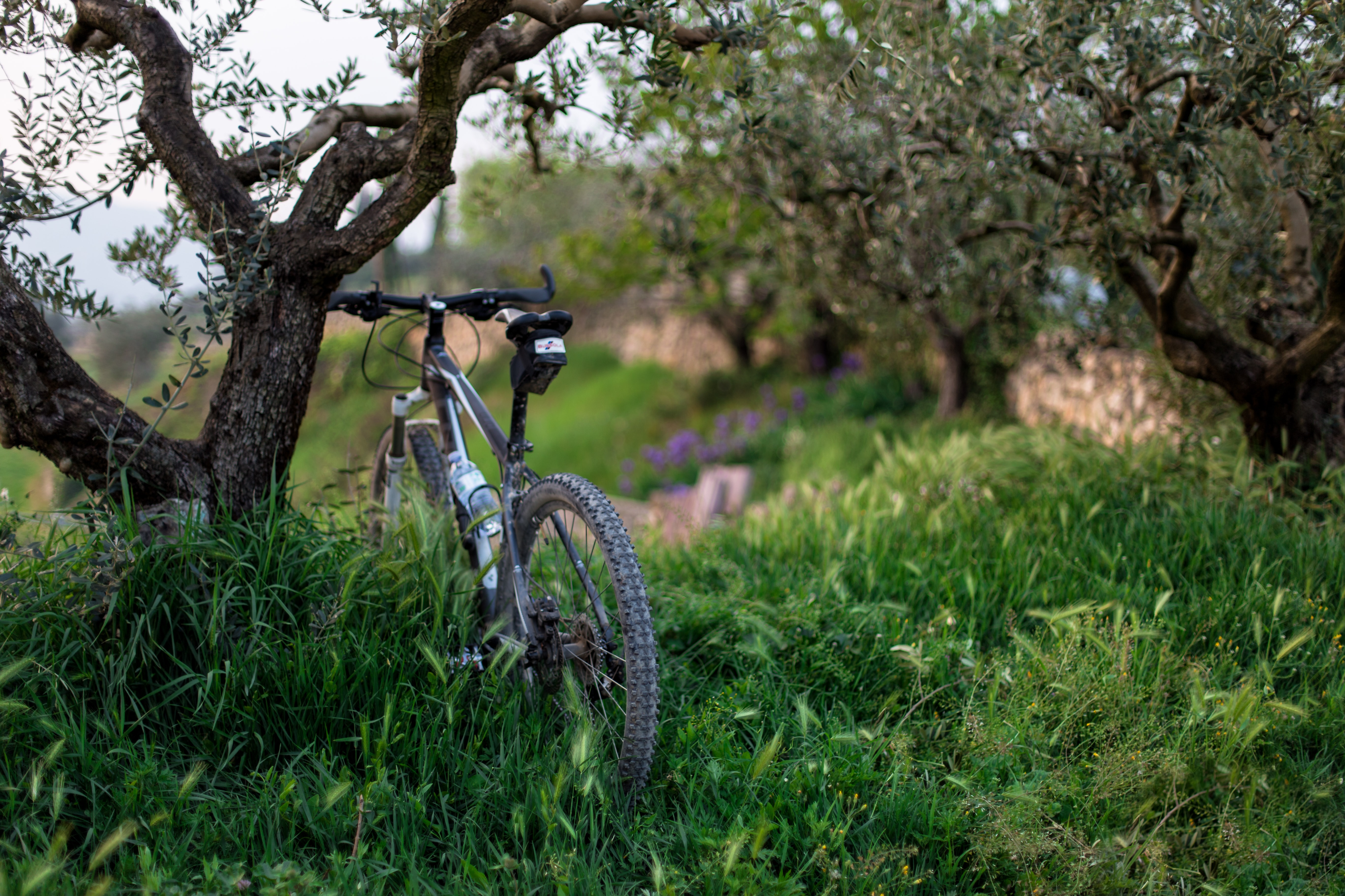 black hardtail mountain bike parked in front of tree