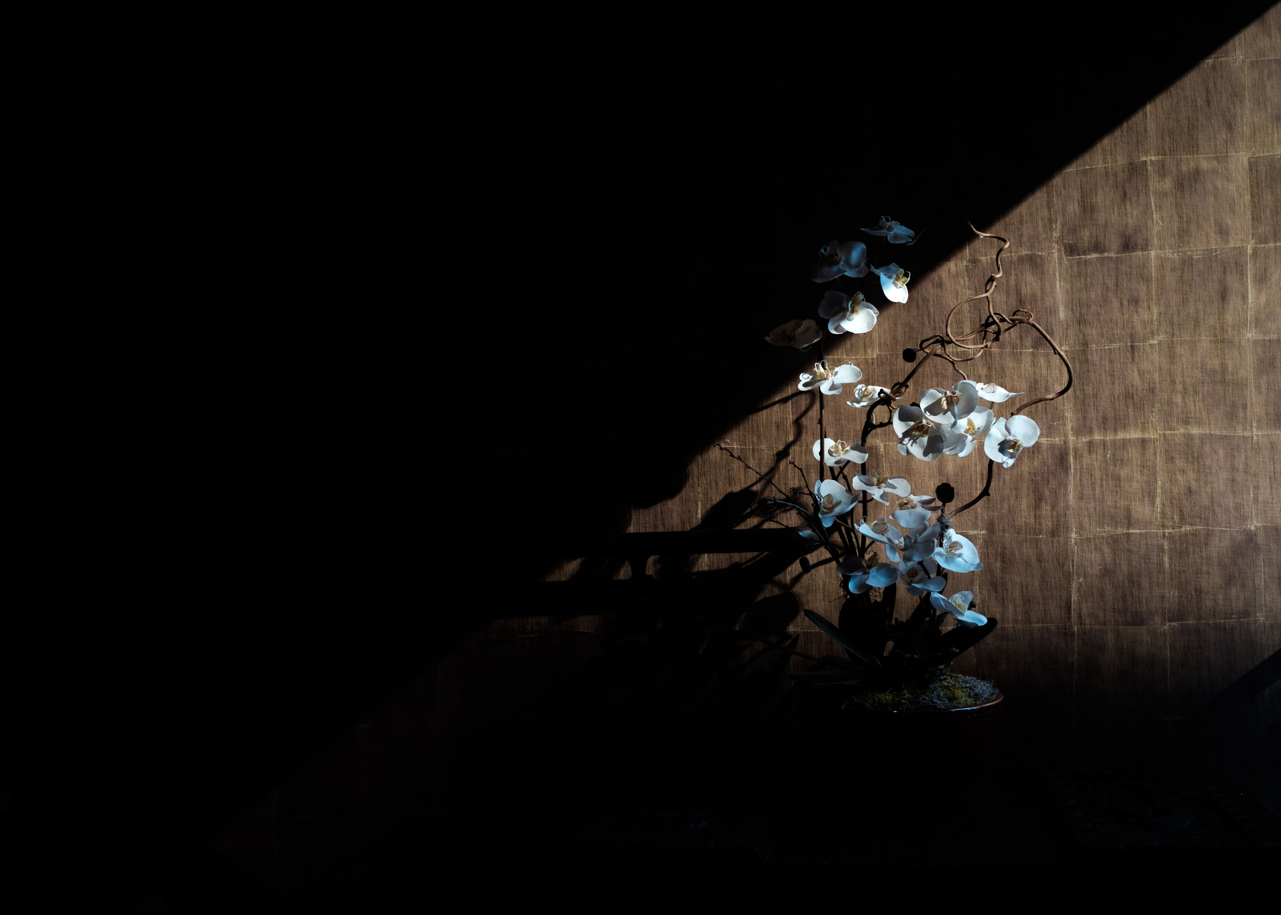 A dim shot of white orchid flowers in a pot illuminated by sunlight from the window