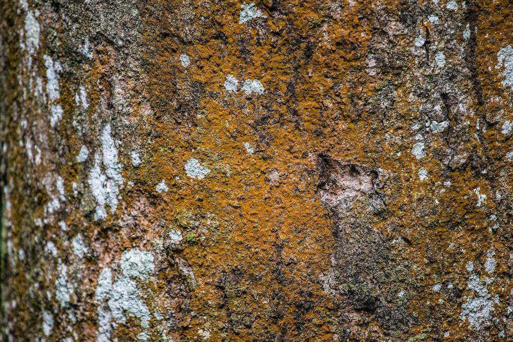 Close-up of dark yellow moss on tree bark