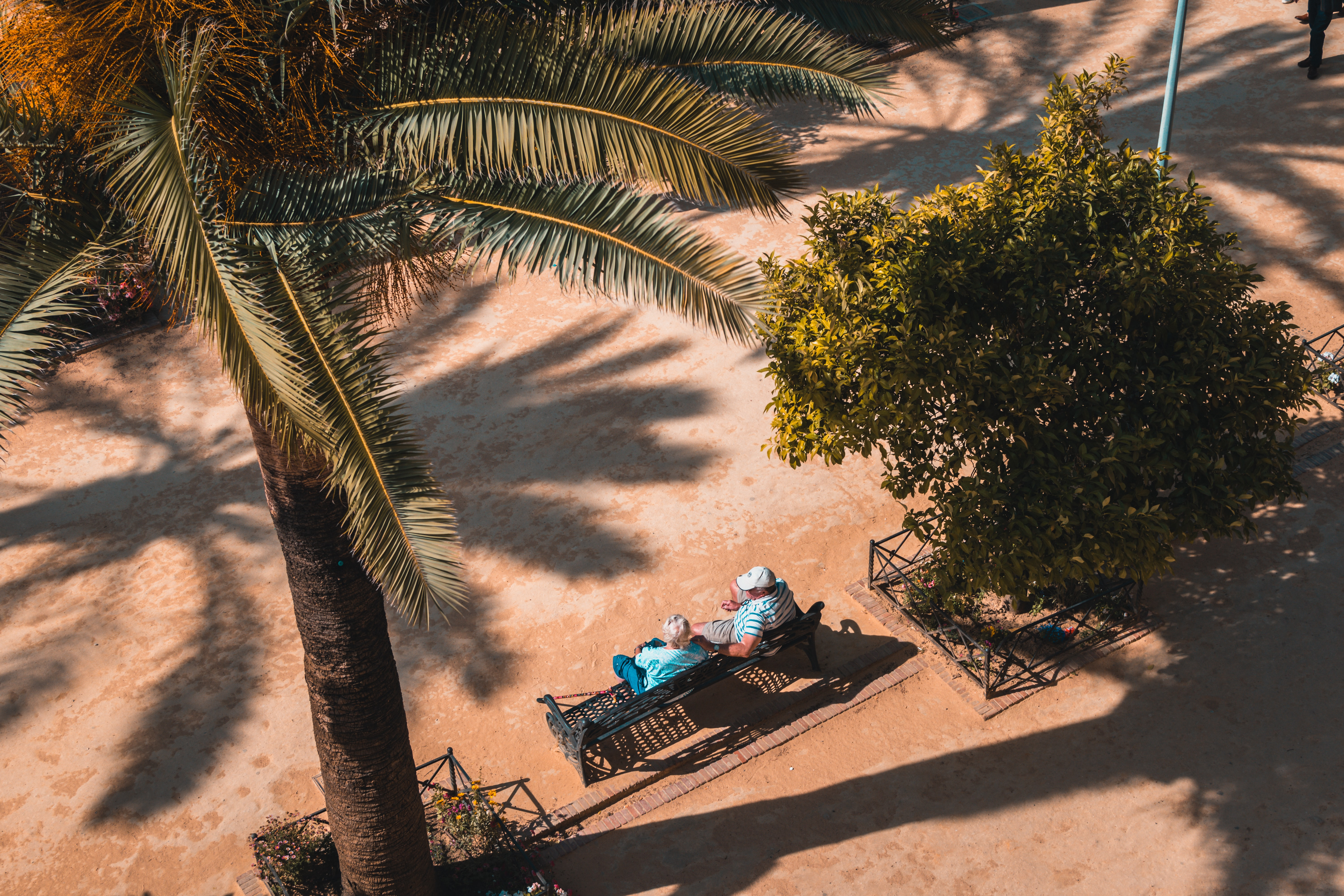 A high-angle shot of an elderly couple seated on a bench under a palm tree