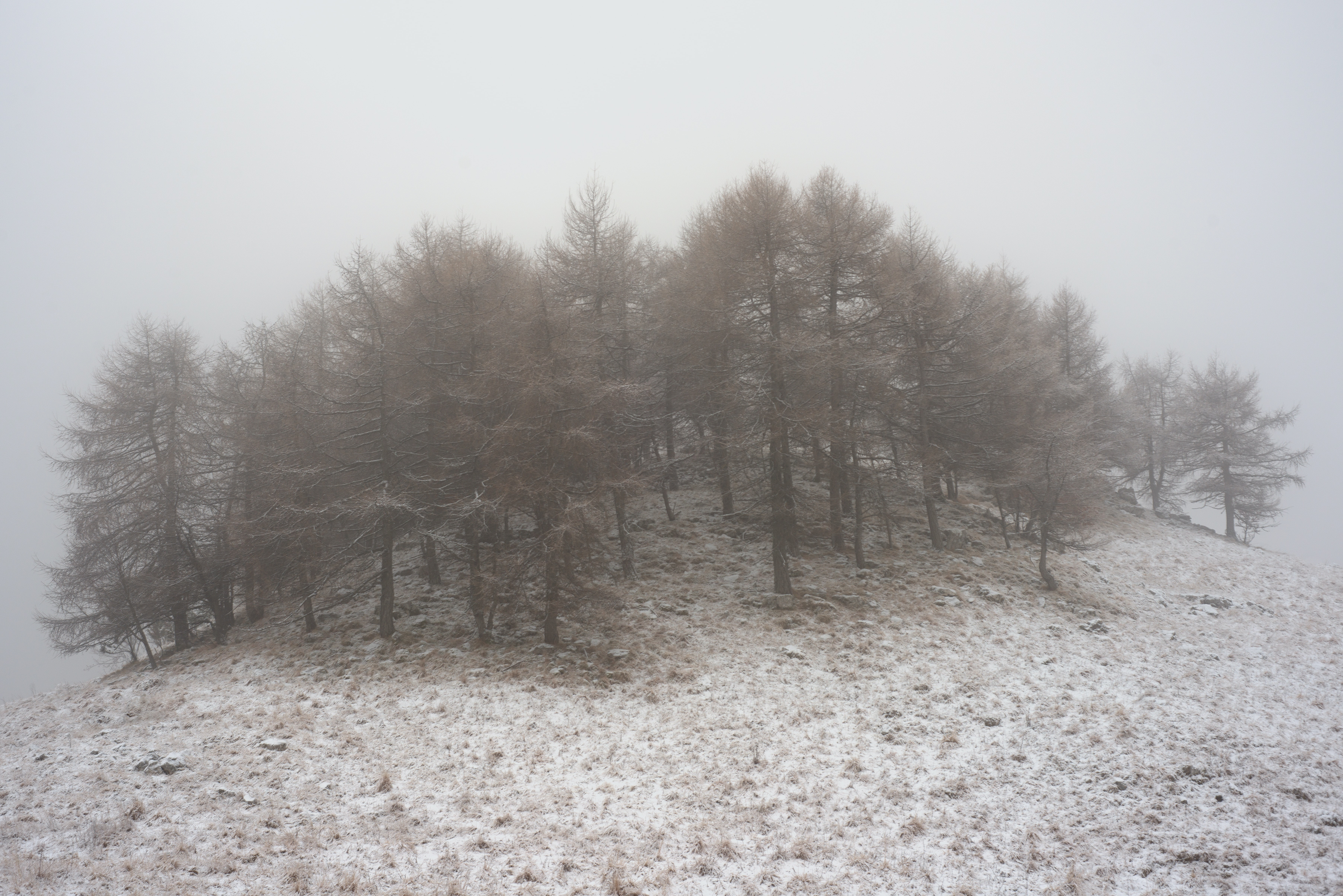 A clump of trees on top of a snowy hill on a foggy day
