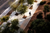 birds eye view of man walking surrounded by trees