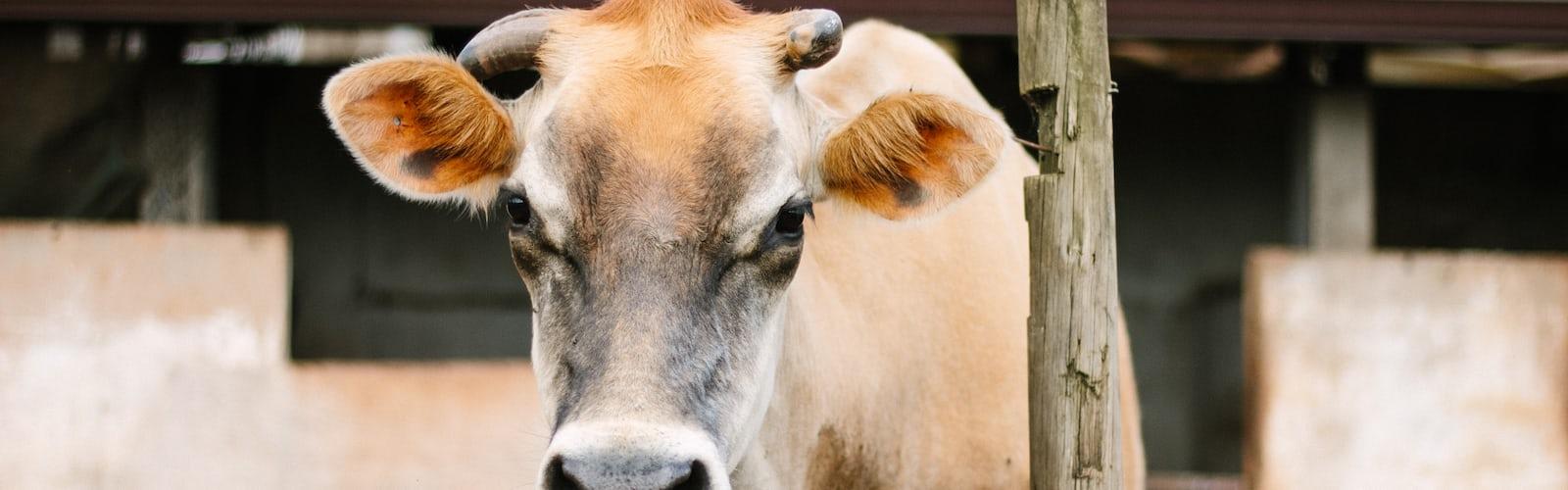 Feed Formula   14 best free feed, farm, animal and grass