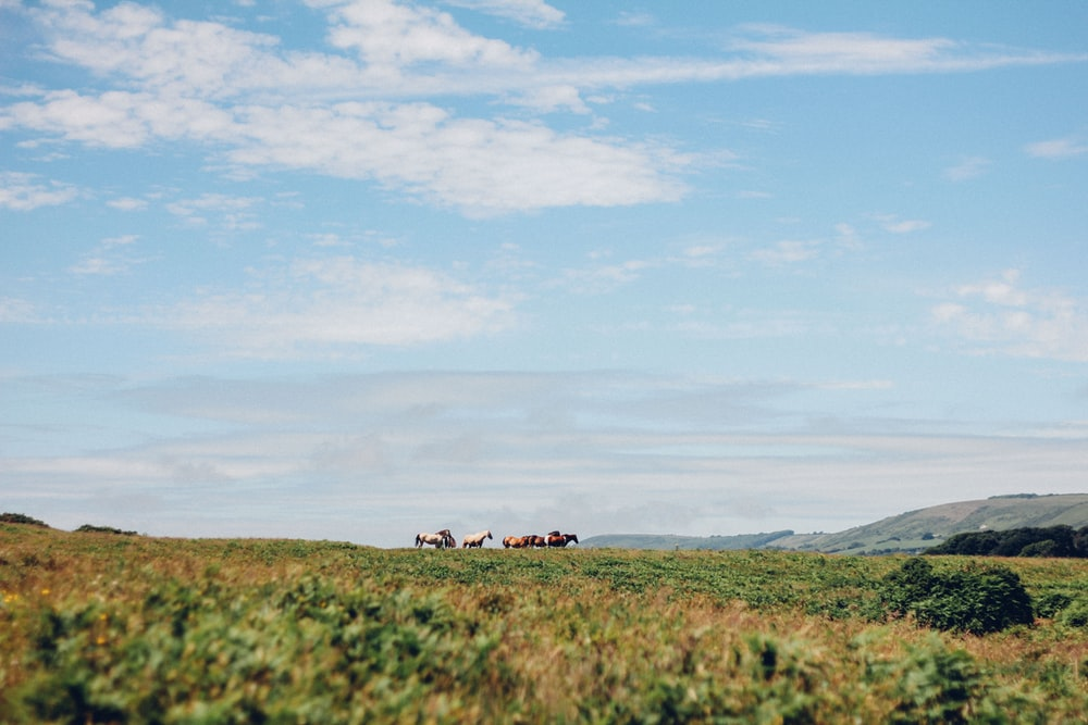 brown and white horses standing on grass field during day time
