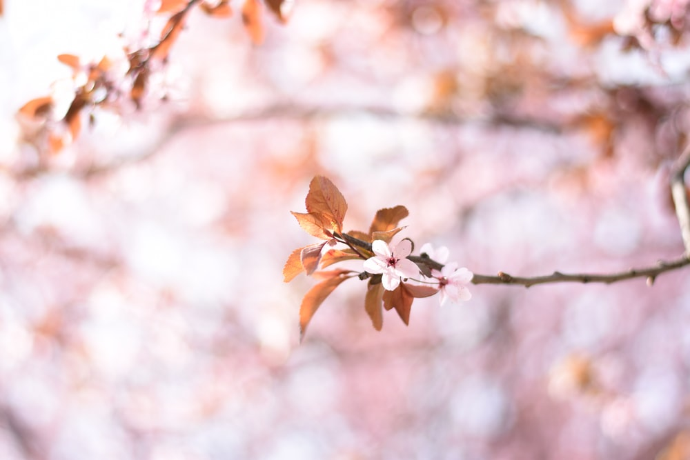 selective focus photo of brown leafed tree