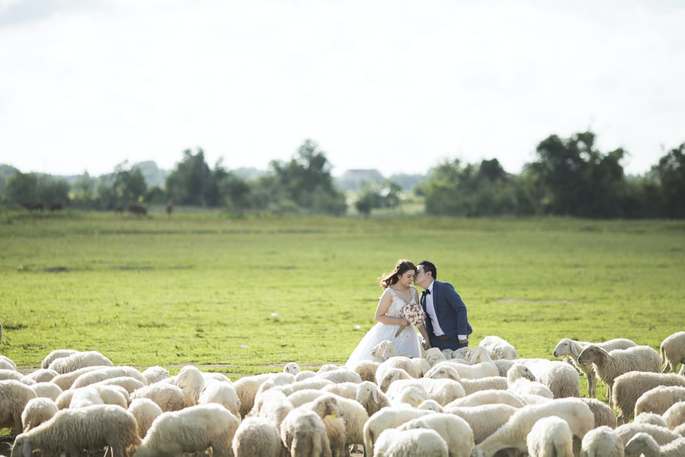 couple in their wedding attire standing in front of sheep herd at daytime