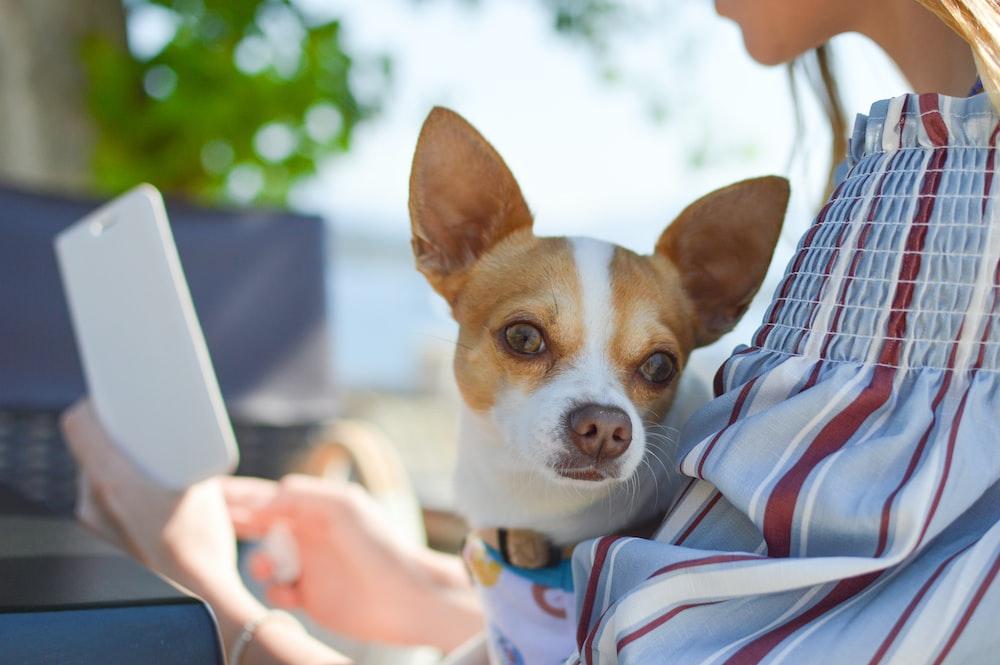 iniciar una estética canina móvil