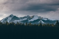 snow capped mountain and forest