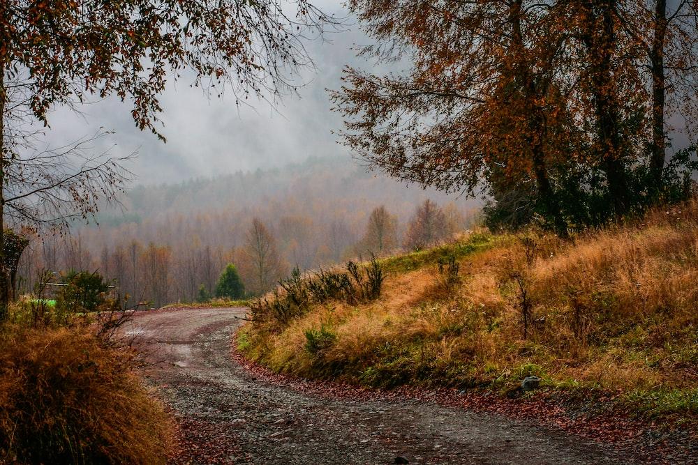 dirt road along trees