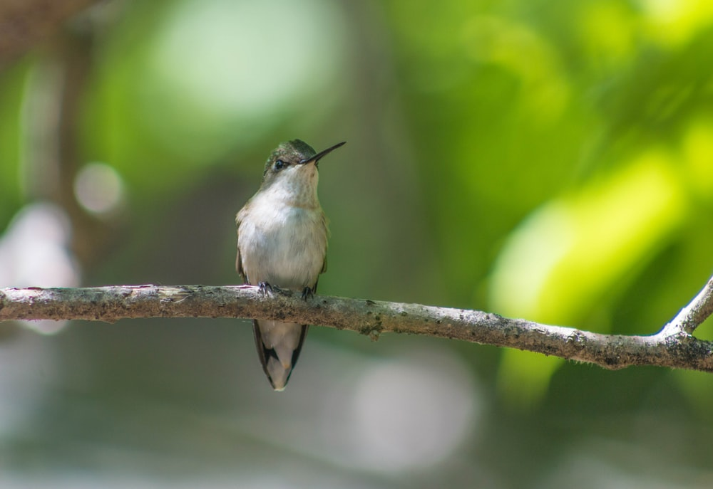 selective photography of bird on tree branch