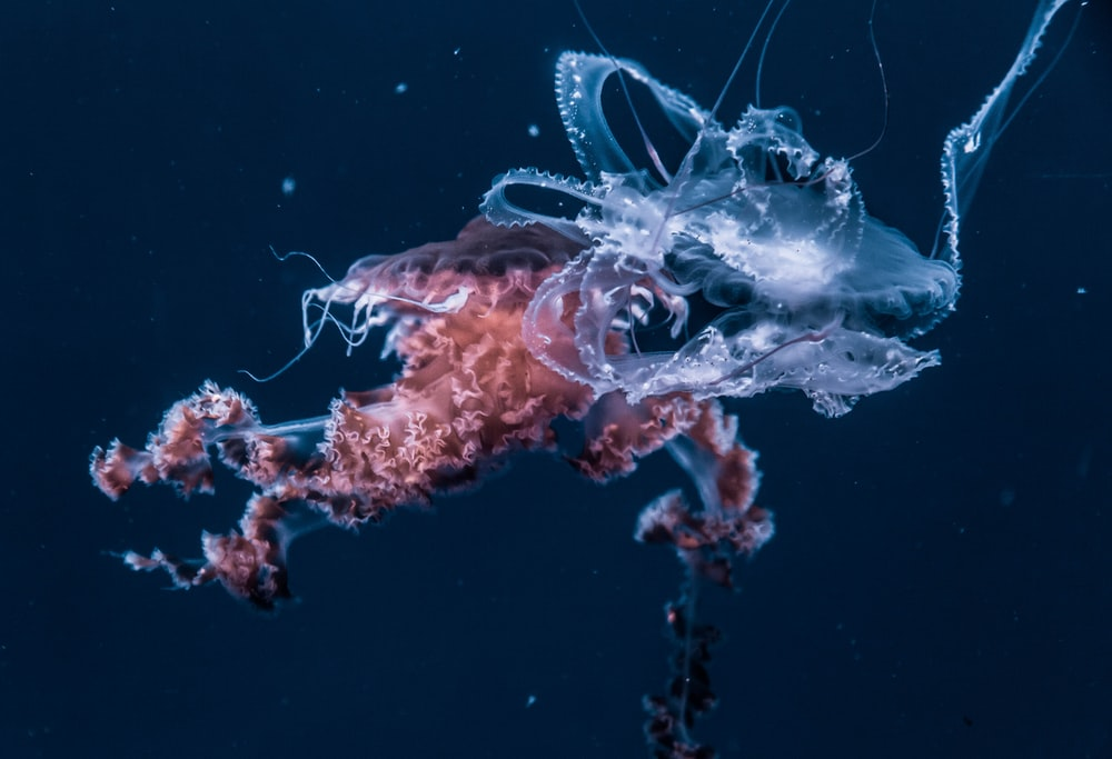 selective focus photography of white and red jellyfish at sea