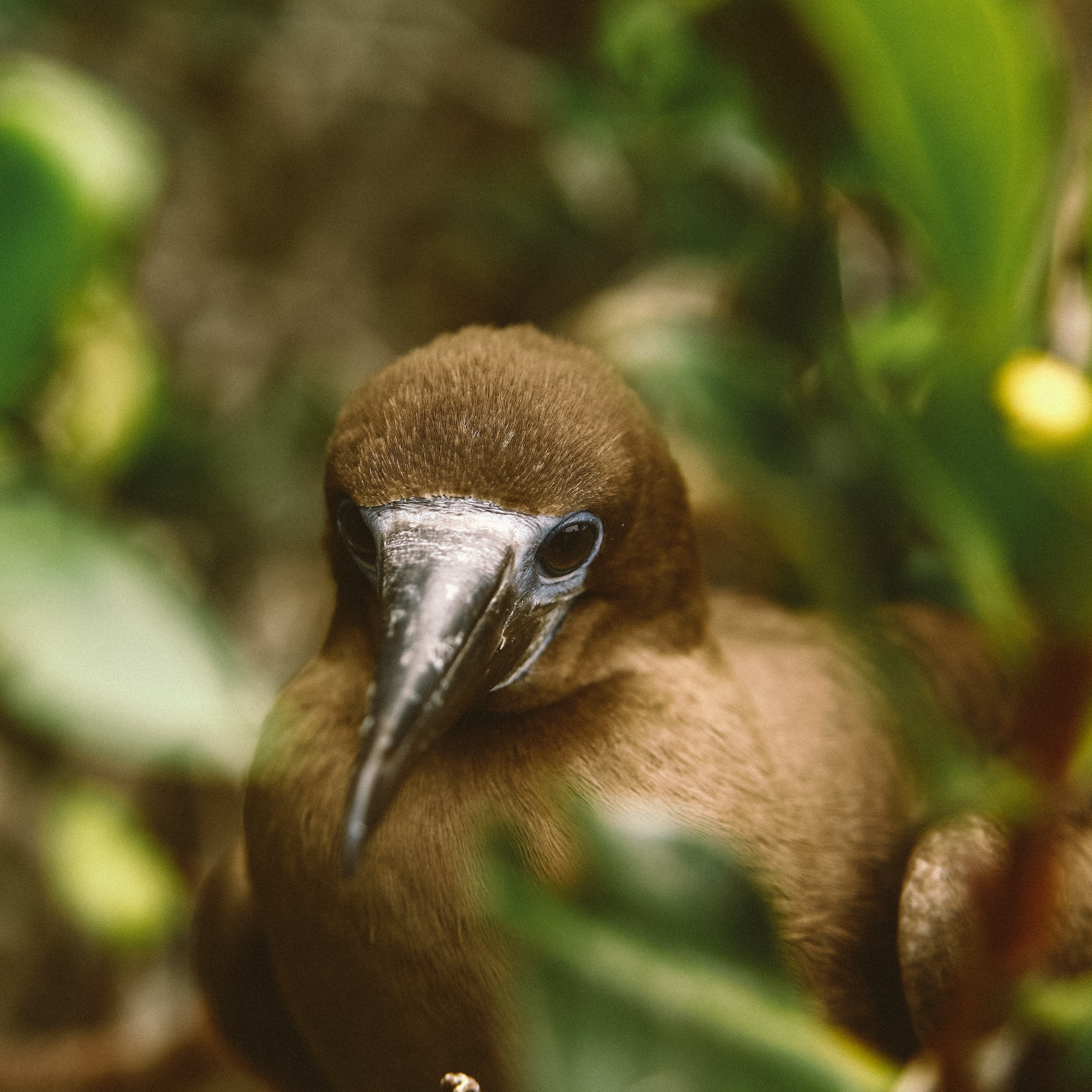 shallow focus photo of brown bitd