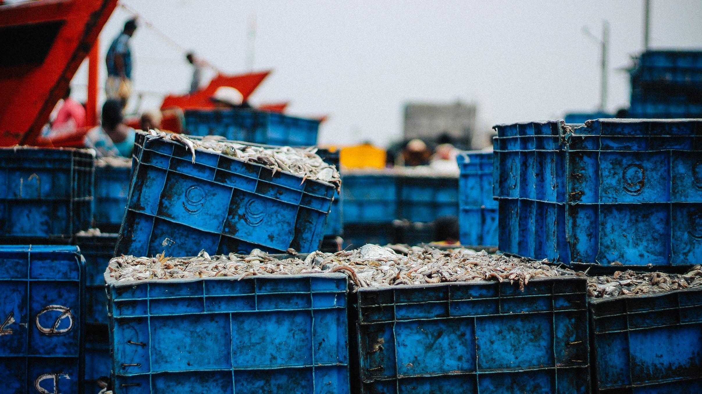 several blue plastic crates stack together