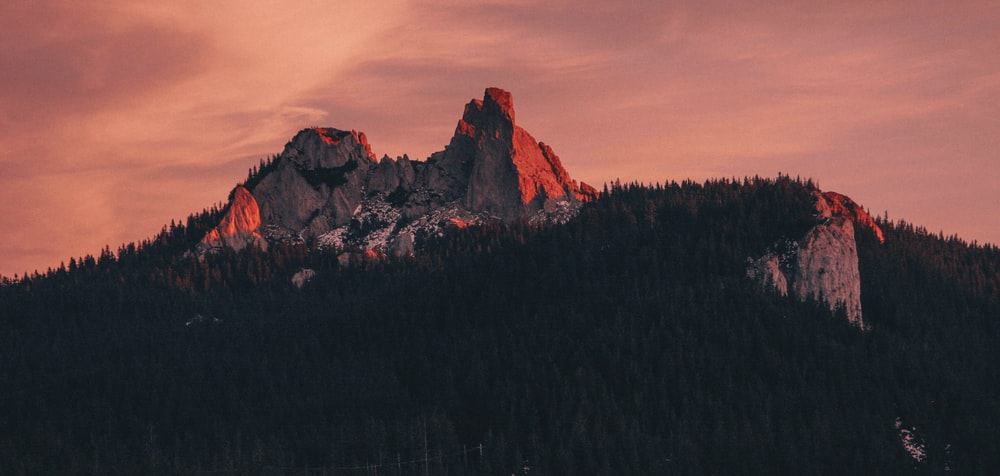 low angle photography mountain forest during golden hour
