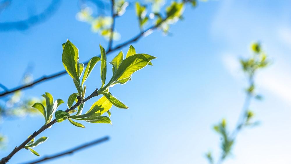 tilt shift lens photography of green plant
