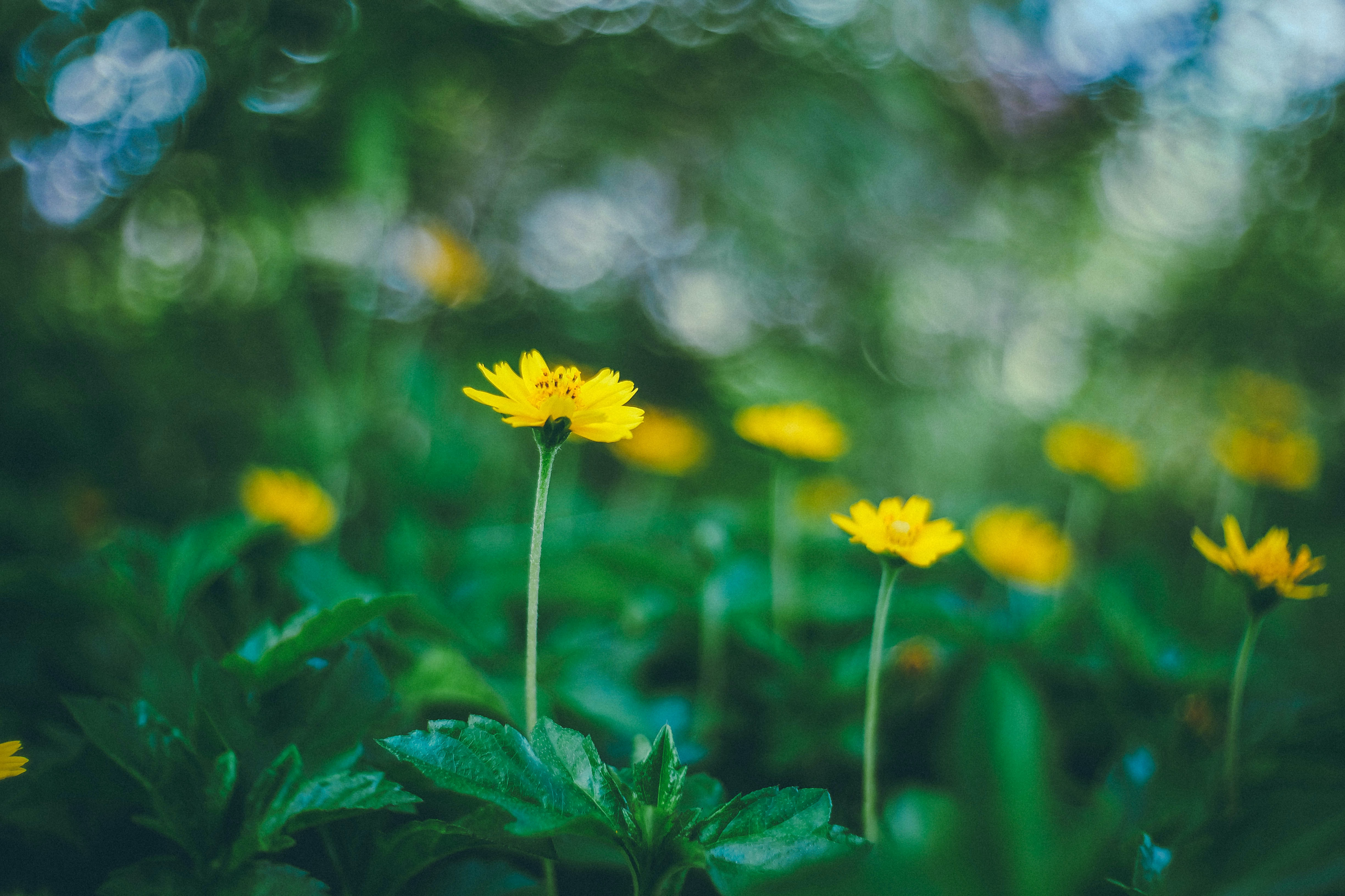 A blurry shot of yellow flowers with bokeh effect in the background