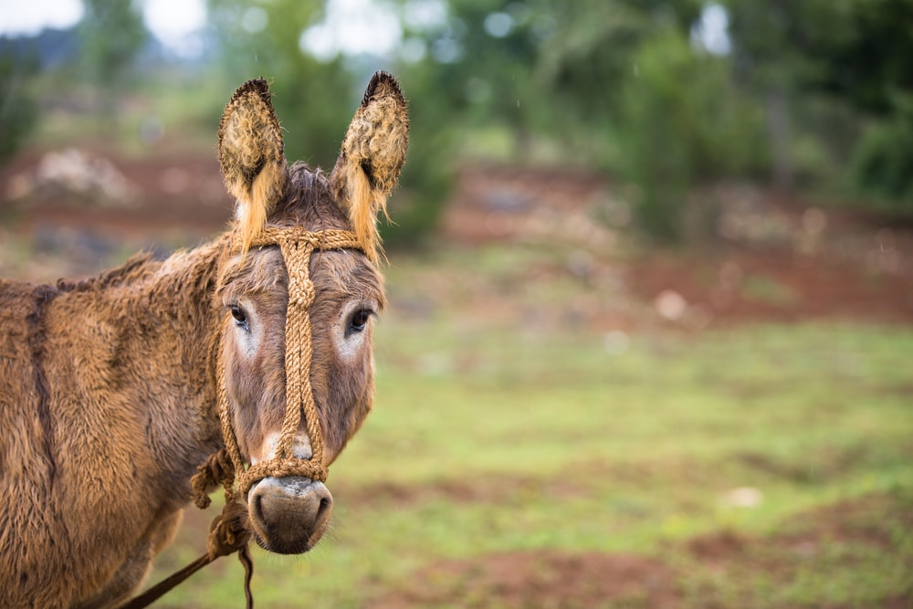 brown donkey standing on grass field