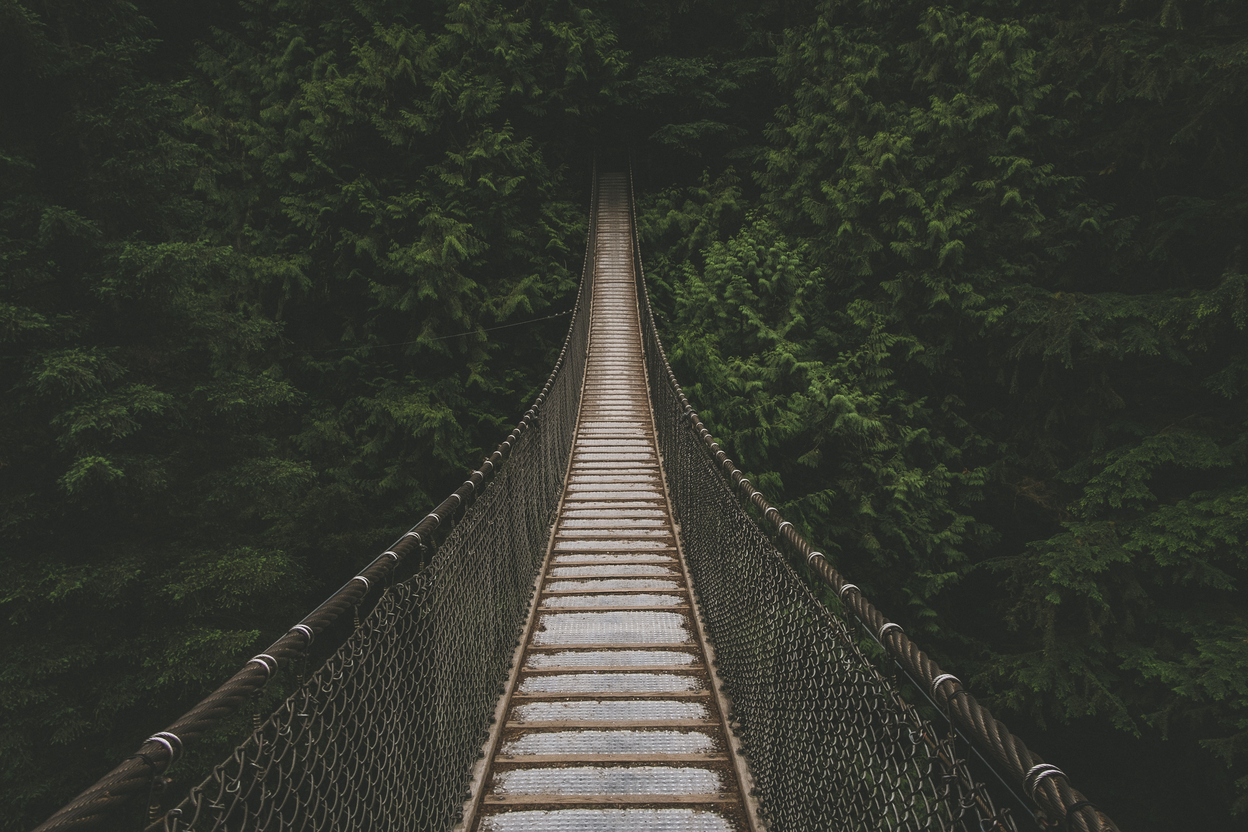 An empty suspension bridge leading to a dense forest