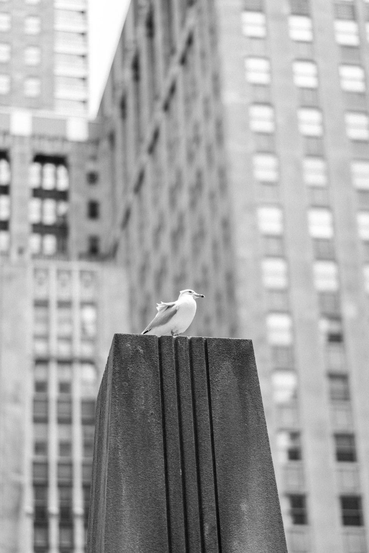 bird on black stone