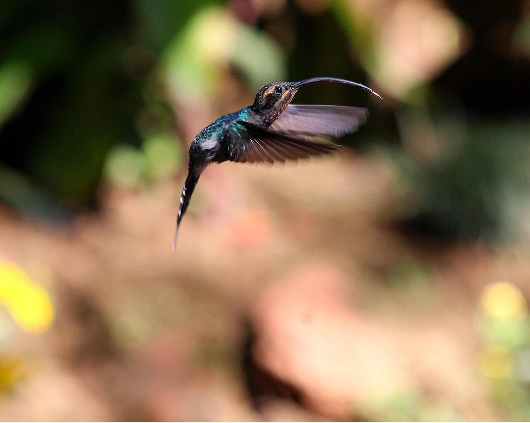 Fluttering Hummingbird