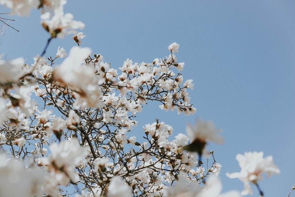 tilt shift lens photography of white blossoms