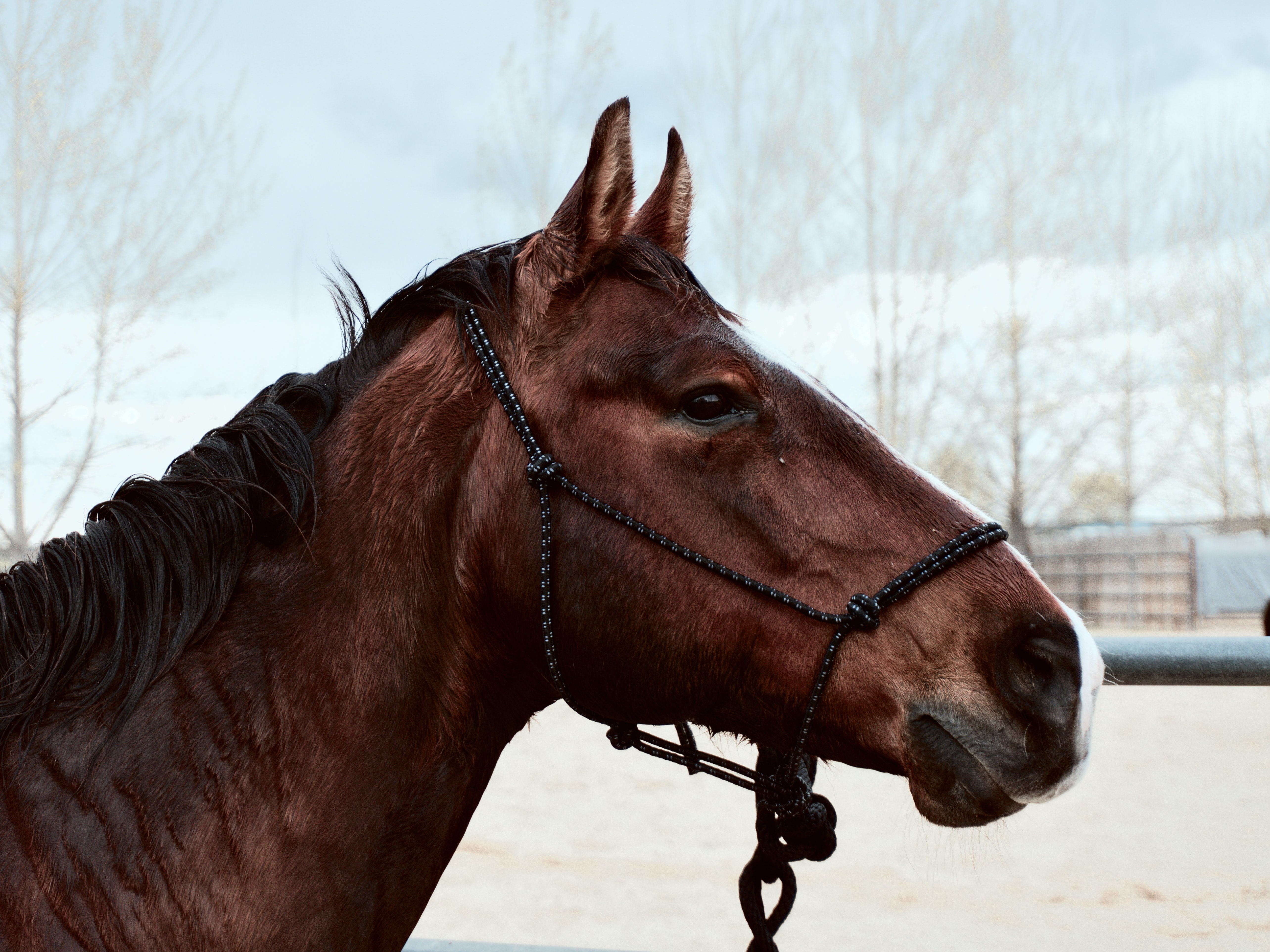The side of the head of a brown horse with a wet black mane