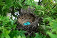 My Nest Story :) nest stories