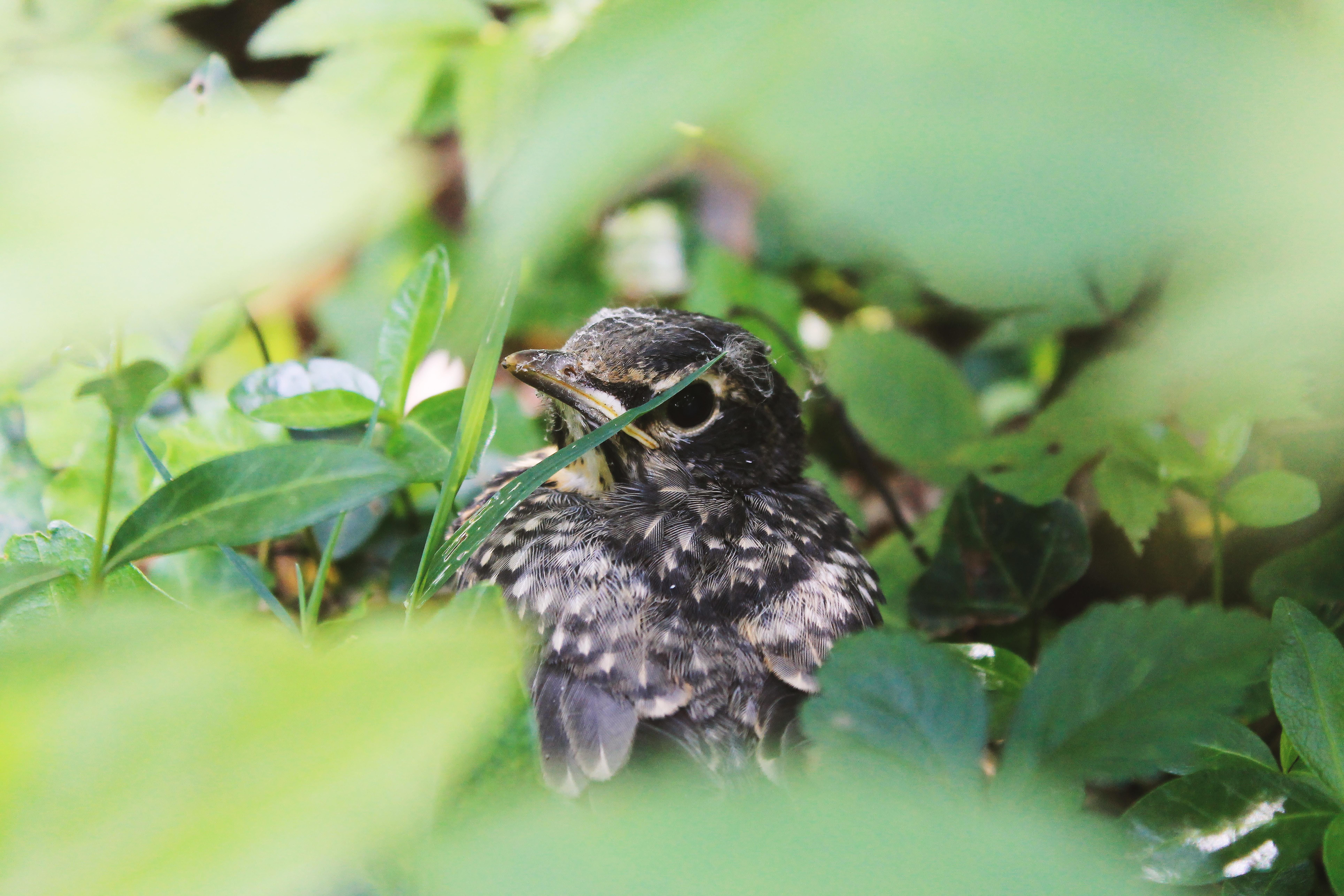 Bird hides behind leaves in the wild
