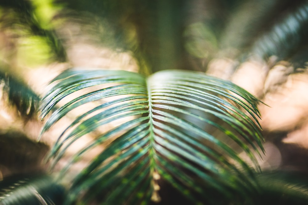 green fern plan in tilt photography
