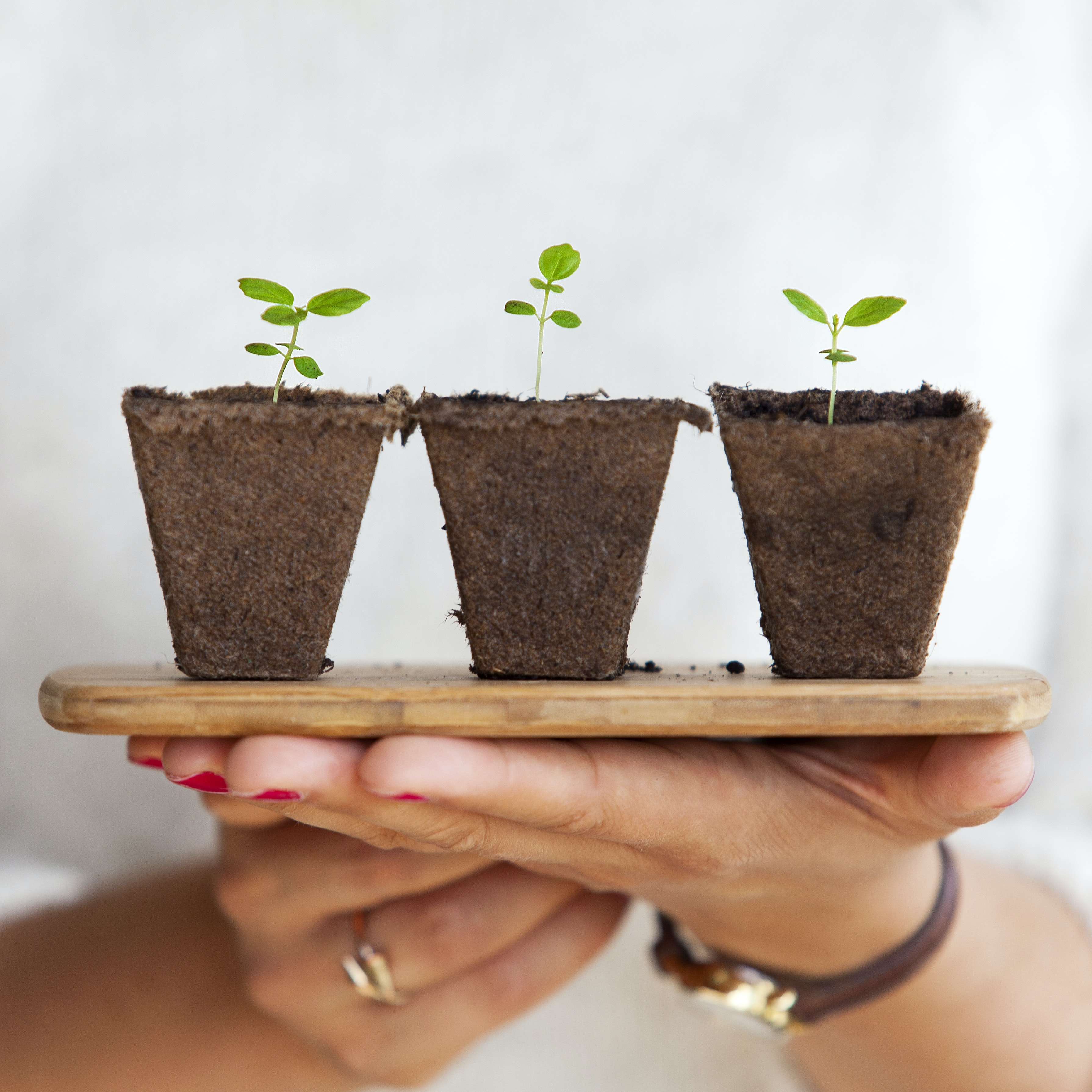 A person holding a wooden board with three small plants taken out of their pots
