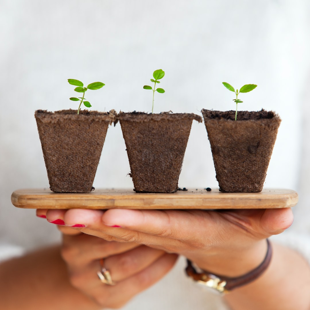 Replanting small plants