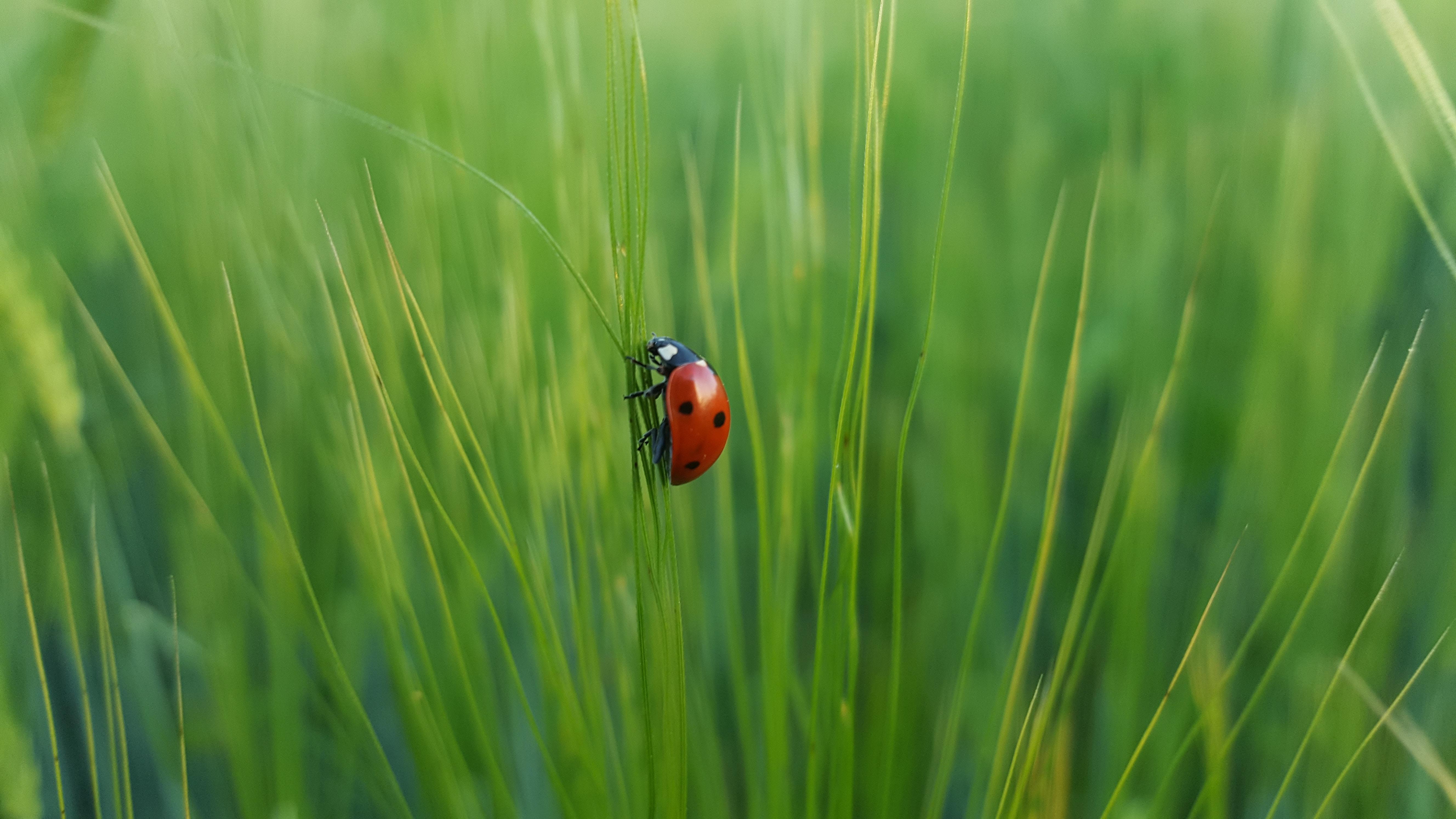 Bug Hunting with Status