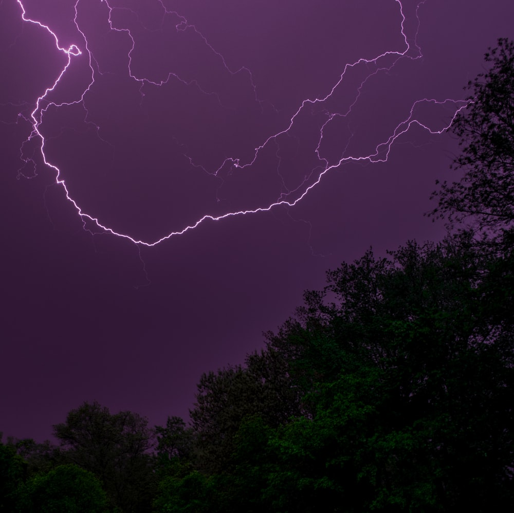 photo of trees during thunderstorms