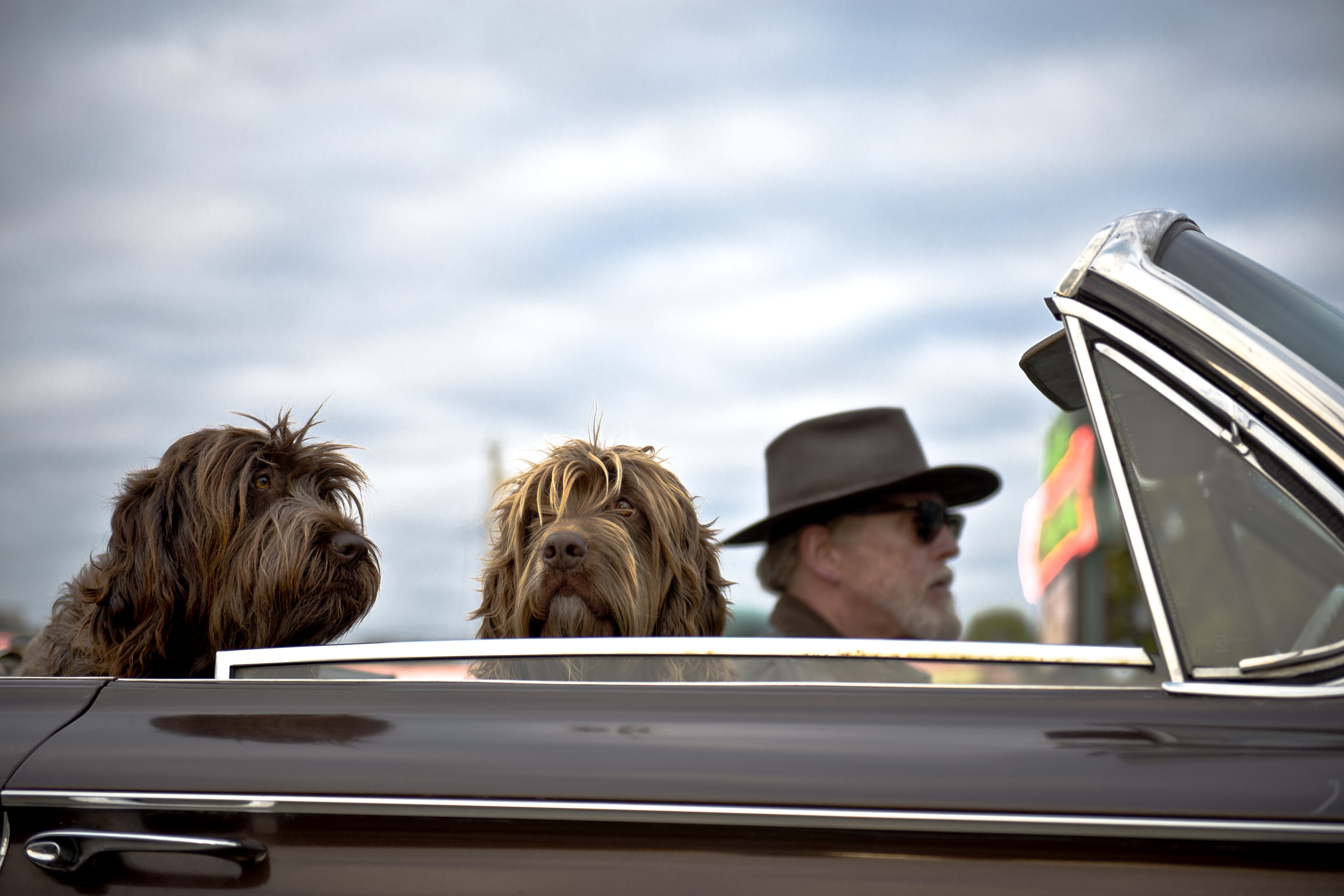 Man with a beard and sunglasses riding in his convertible with two dogs