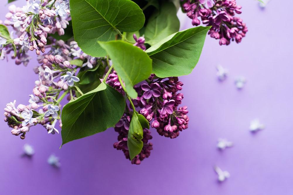 macro shot photo of purple flowers